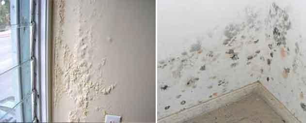 Cómo secar un piso y paredes mojadas usando un deshumidificador