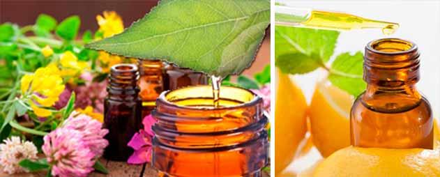 extraccion-de-aceites-esenciales