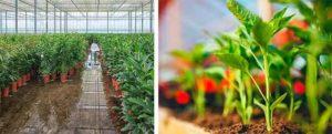 humidificadores para cultivos de interior