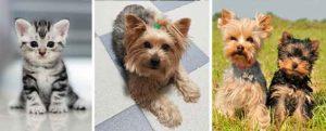 humidificadores para mascotas