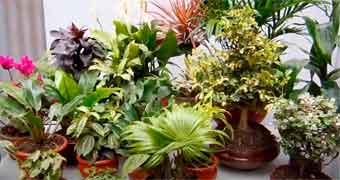 plantas-internas